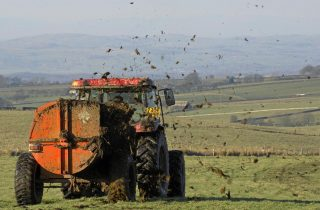 Spreading farmyard manure from the Limousin cross suckler herd on John Beck's Whitray Farm, Low Gill, Lancashire. The farm also runs a flock of Lonk crosses and Swaledale ewes.